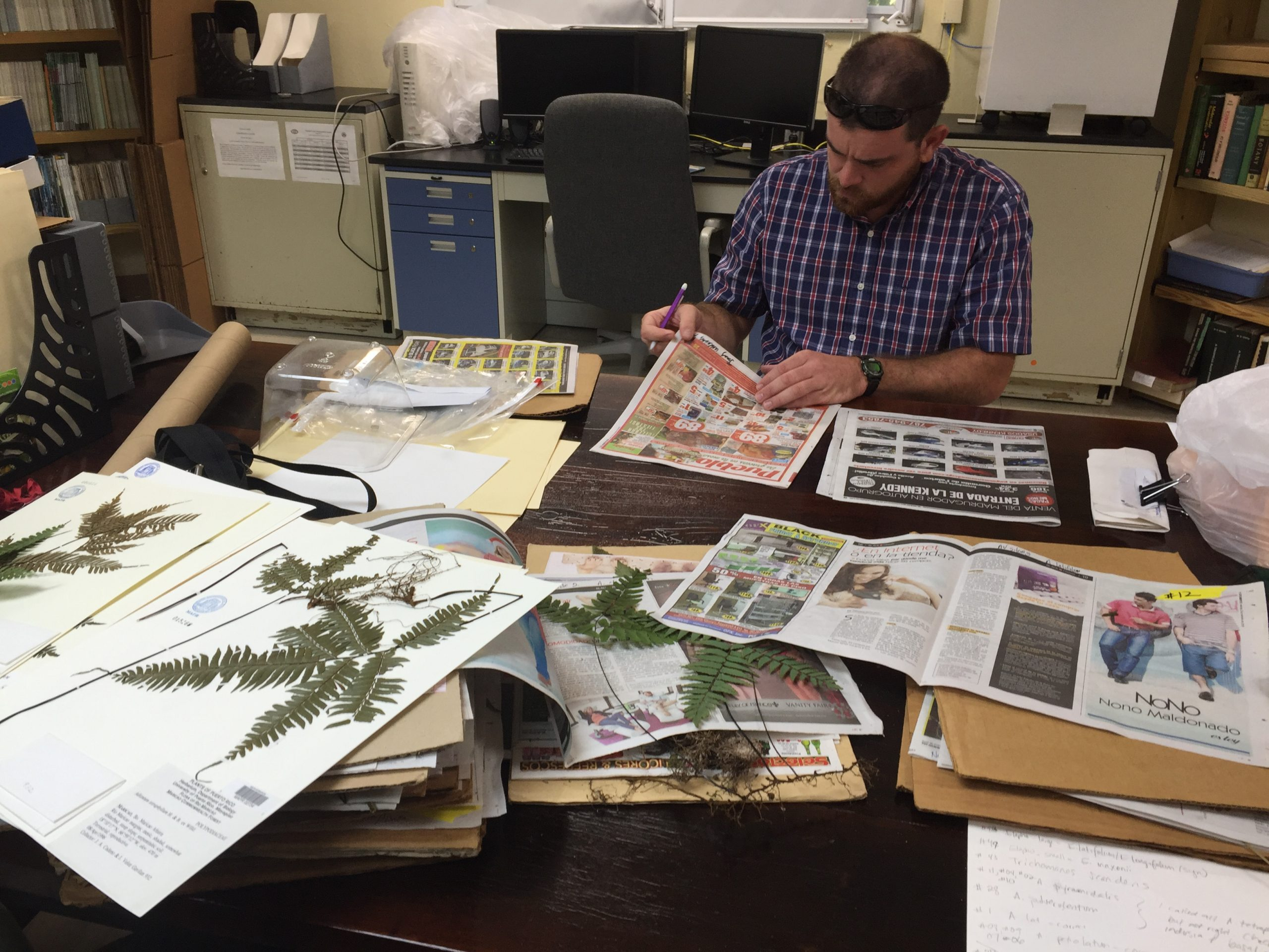 Before field surveys, Jimmy (above) and Jennifer studied specimens in the University of Puerto Rico herbarium at Mayaguez to better familiarize themselves with targets species.