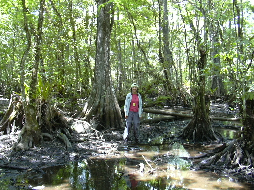 Photo of Anne Frances monitoring the big cypress during her work at the Institute for Regional Conservation During and following her master's work, Anne worked as a field botanist for the Institute for Regional Conservation and the seed lab at Fairchild Tropical Botanical Garden. Her work at IRC included monitoring the big cypress she is pictured with here.