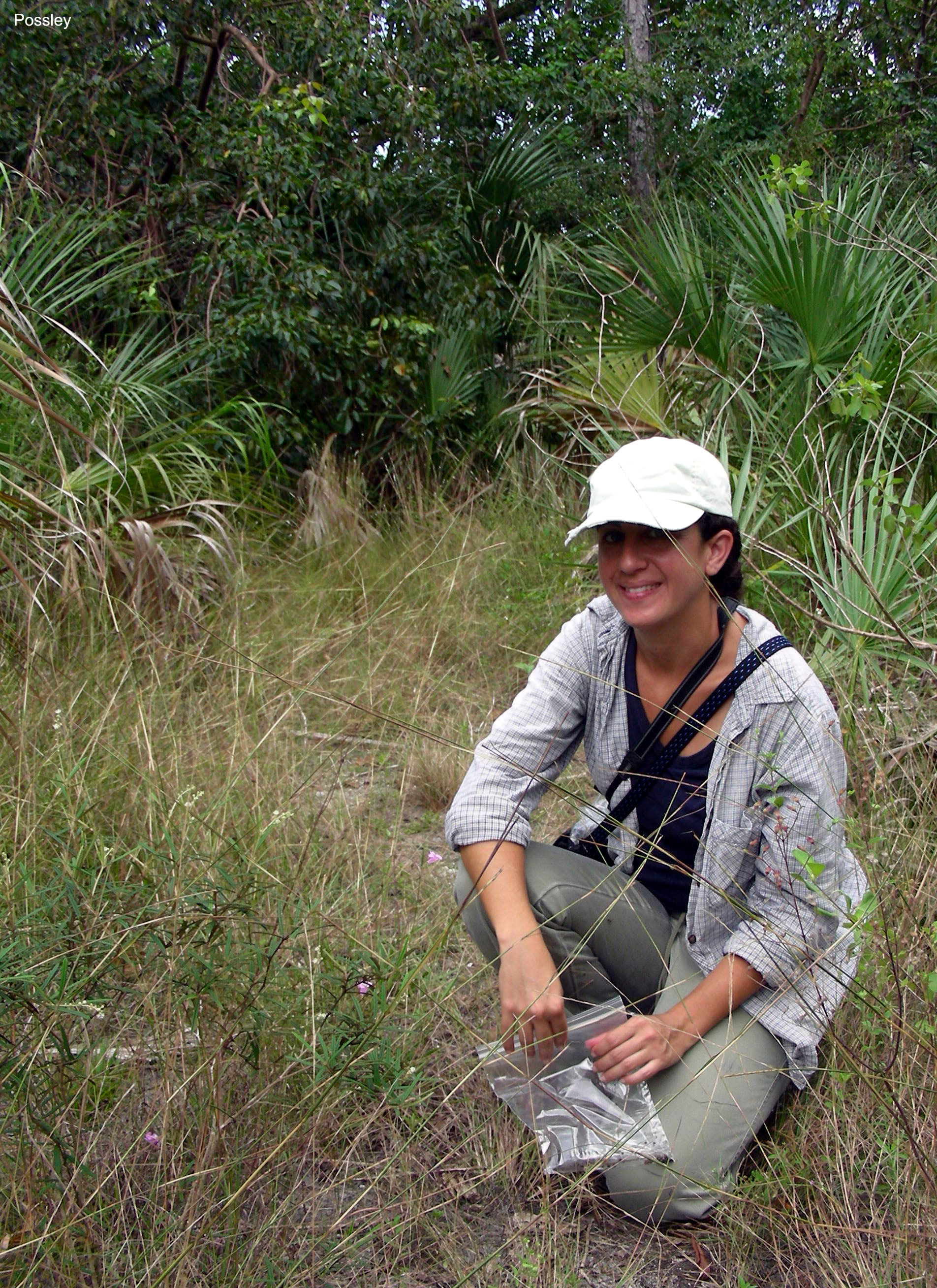 Anne Frances collecting Agalinis seeds at R. Hardy Matheson Preserve in 2006.