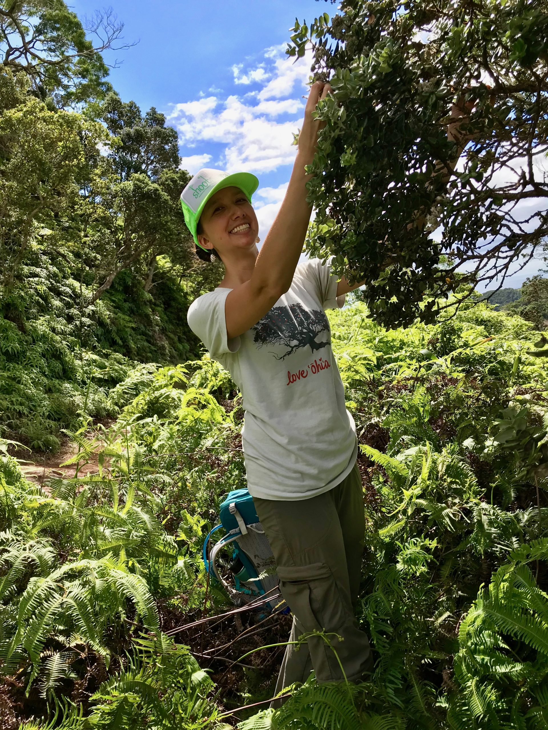 Lyon Arboretum Seed Bank Manager, Marian Chau, Ph.D., makes a seed collection from Metrosideros polymorpha var. polymorpha on O'ahu, while sporting a shirt that shares her love for these culturally important trees.