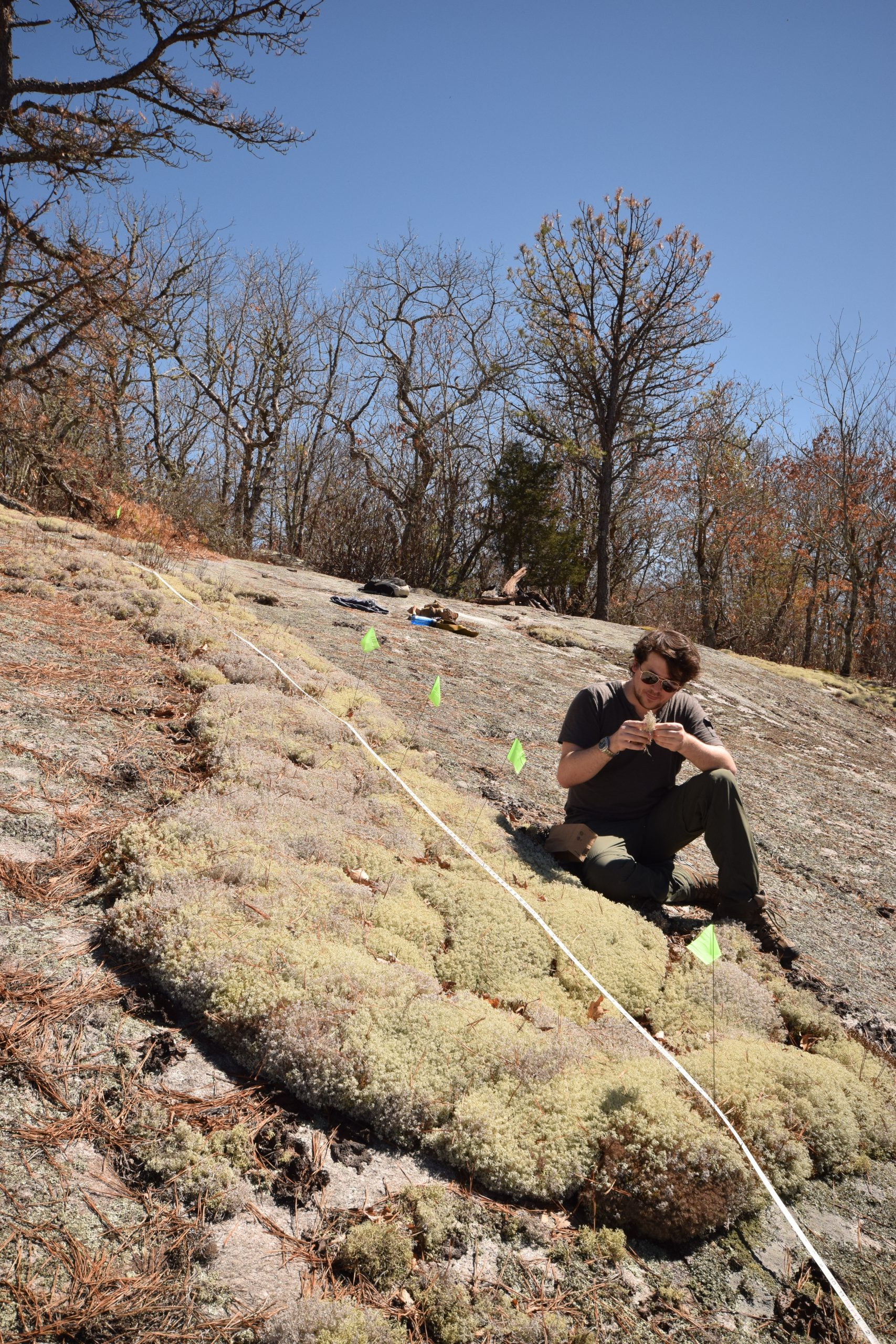 NYBG-CUNY graduate student Jordan Hoffman studying Cladonia (reindeer lichen) on Whiterock Mountain, Nantahala National Forest, North Carolina.