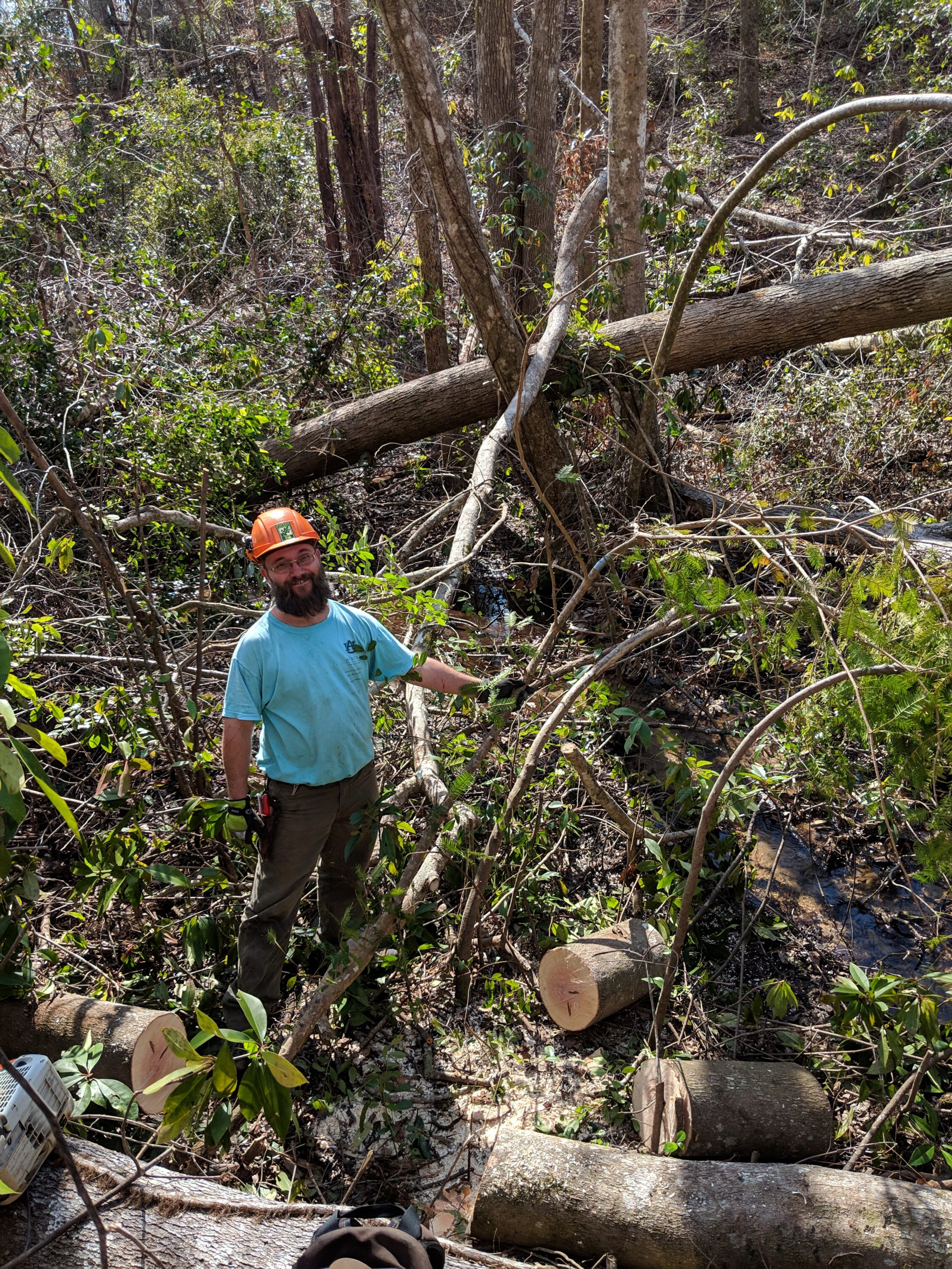 After the storm, saw skills proved key to ABG's torreya conservation program, as the removed debris that imperiled surviving trees.