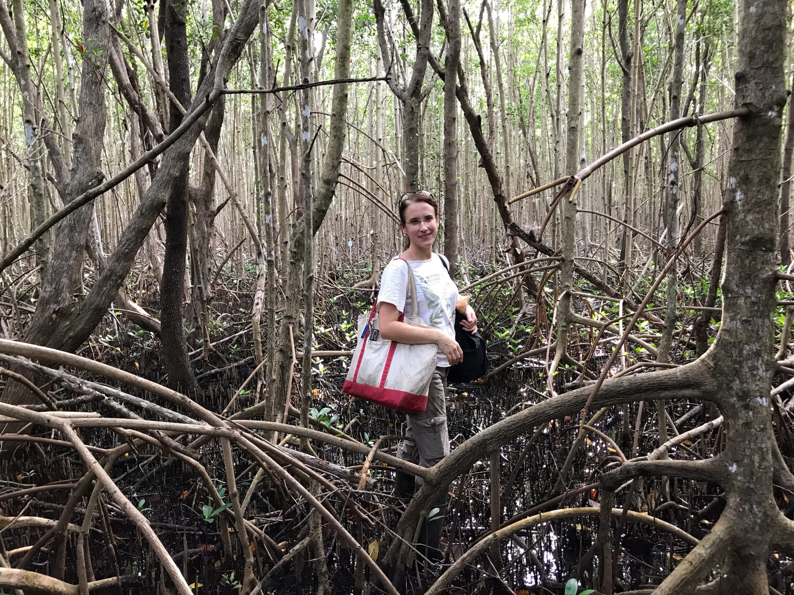 At the Deering Estate in Miami, Jennifer enjoys trekking through the prop roots of the tall mangroves to reach monitoring plots in the preserve.