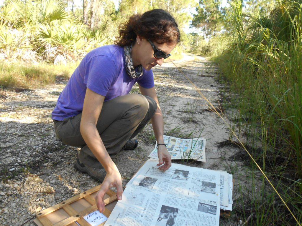 Jenn makes an herb specimen.