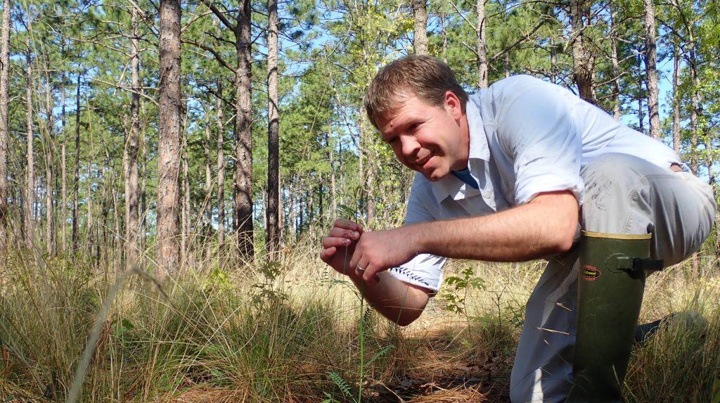 North Carolina Botanical Garden conservationist, Mike Kunz, monitoring Astragalus michauxii on Fort Bragg.