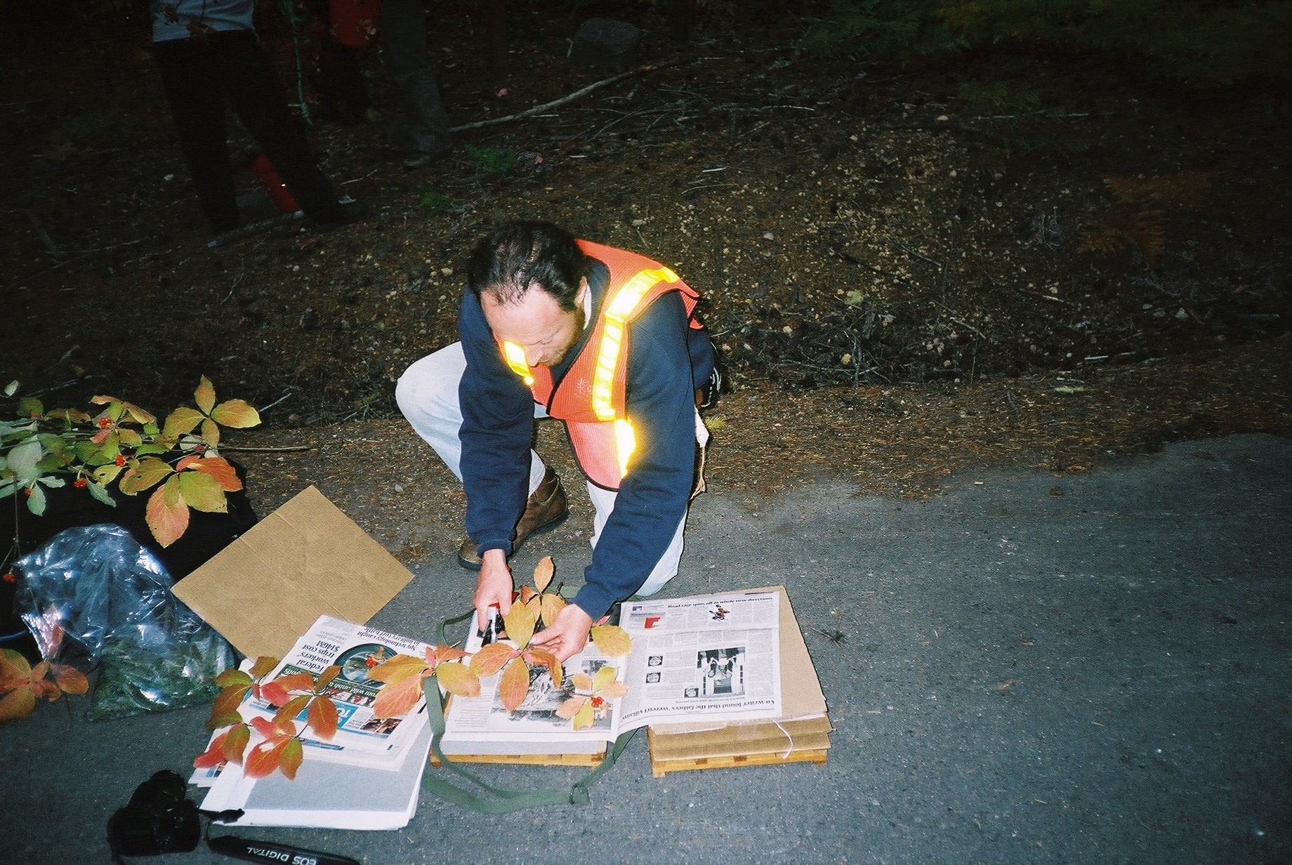 Collecting trips can mean late nights, here Michael Way presses leaves of dogwood (Cornus spp.) in Oregon.