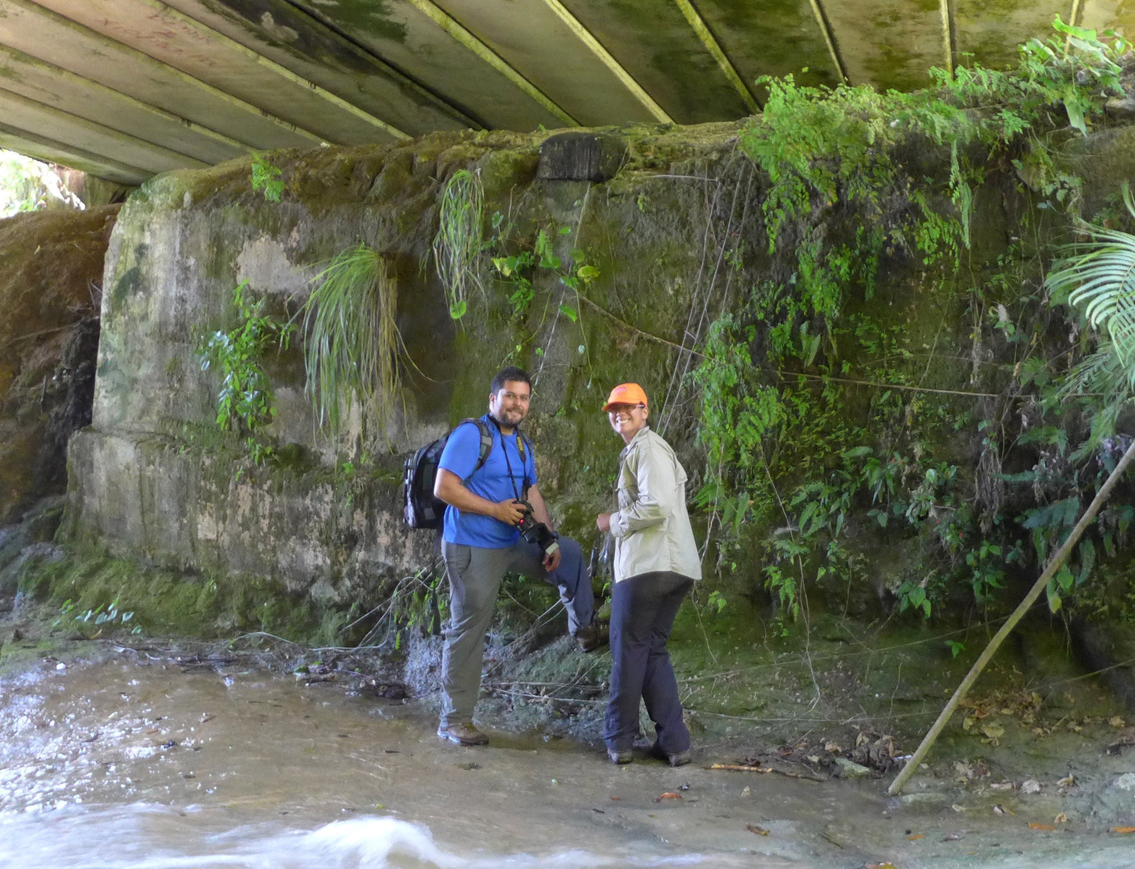 Omar Monsegur-Rivera and Barbara Sanchez look for Thelypteris verecunda beneath a bridge.