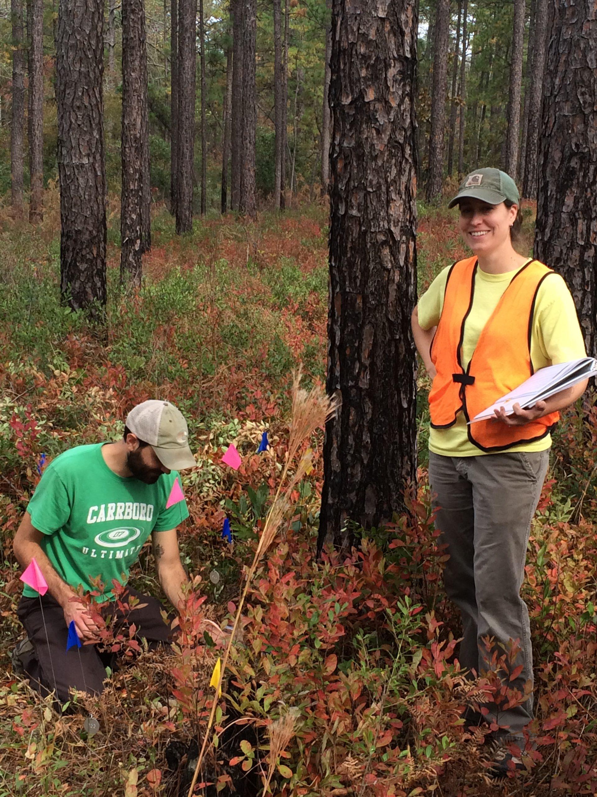 Staff of NCBG planting Lilium pyrophilum and recording data.