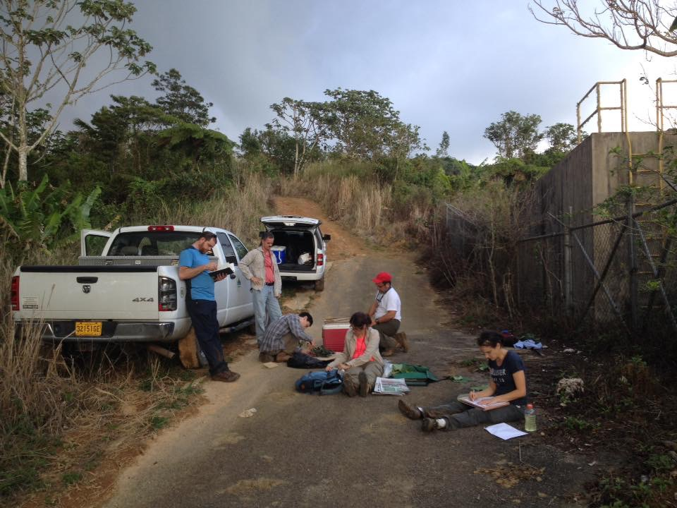 The team processes specimens after a day of field work in Puerto Rico.