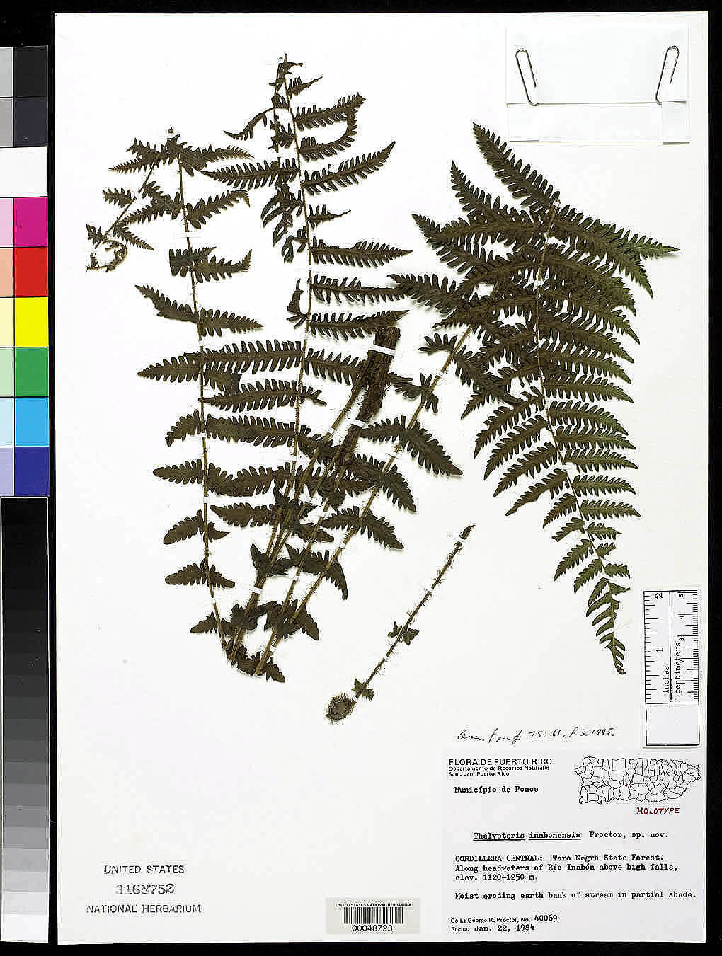 Thelypteris inaboensis