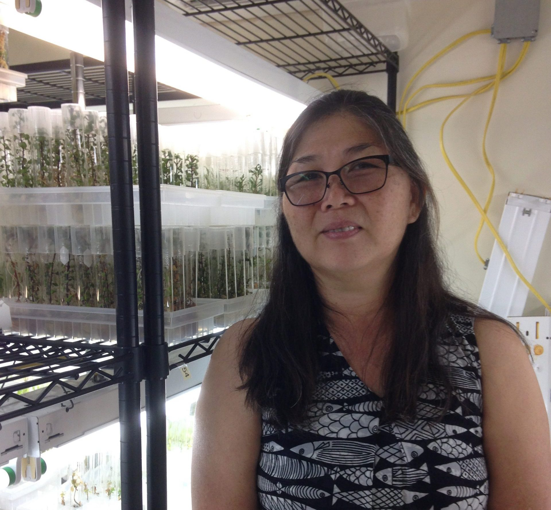 Nellie Sugii, a key partner in the part of the collaboration focused on Hawaiian species, stands in her new micropropagation lab at Lyon Arboretum.