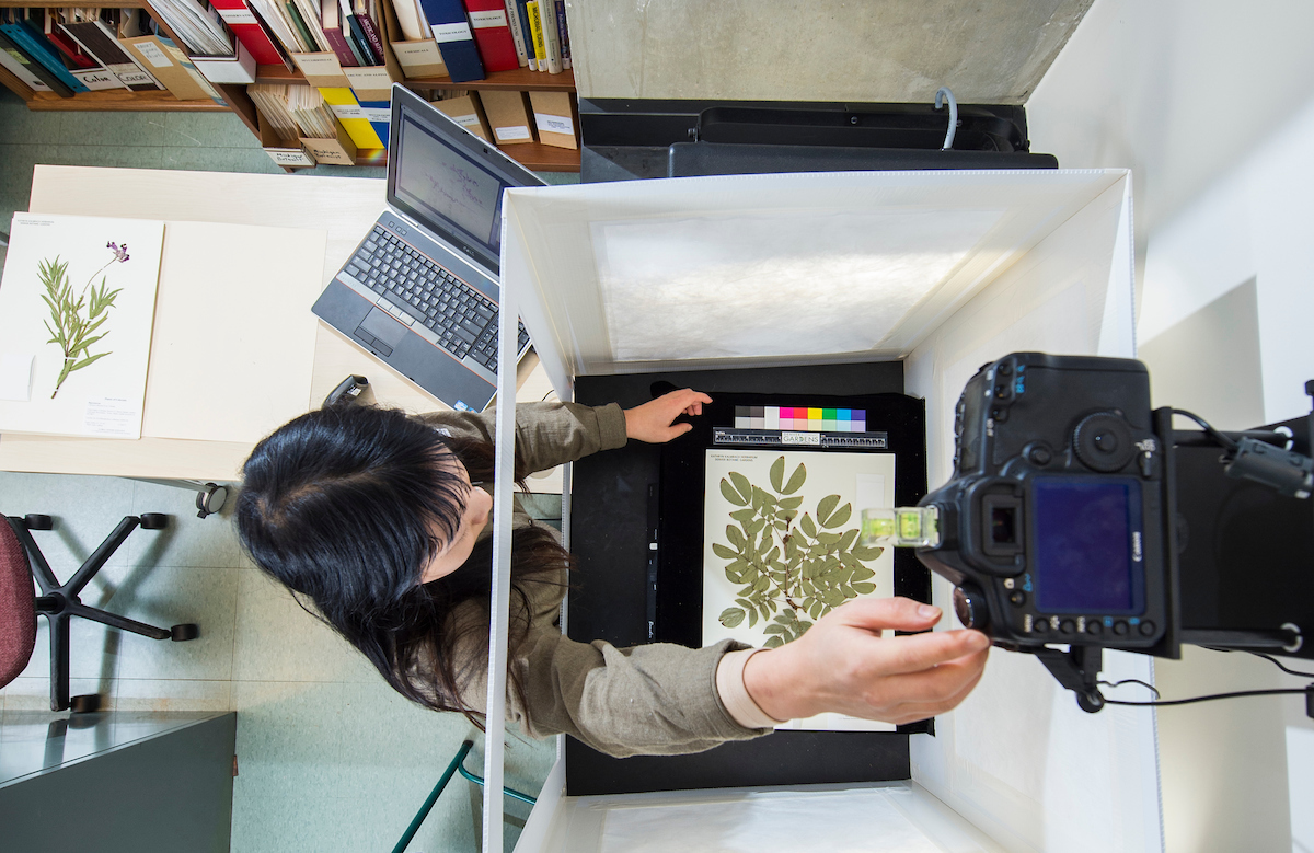 High resolution imaging of herbarium specimens allows the Gardens' to share this precious research with the scientific community through iDigBio.