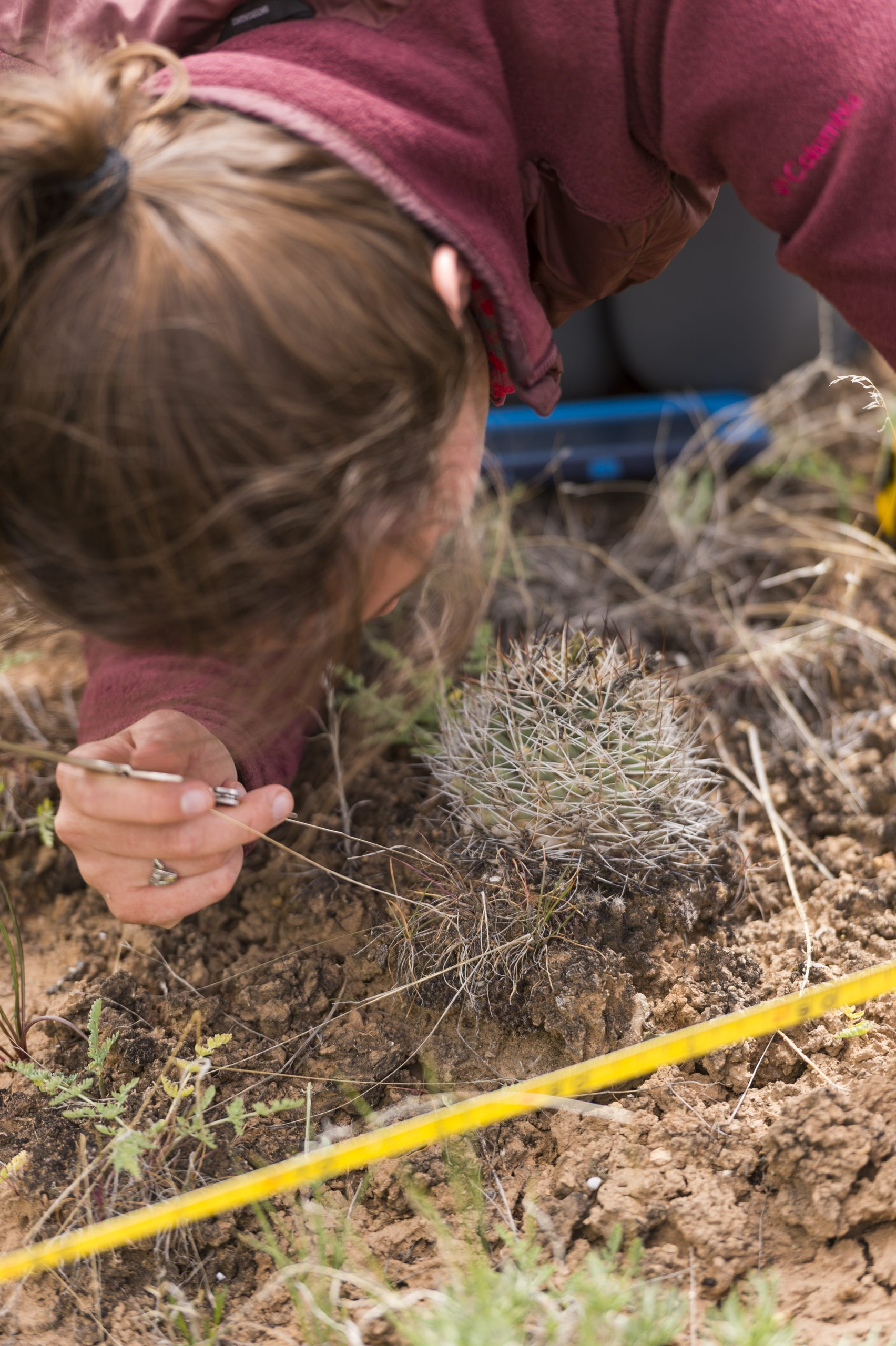 DBG research team in the field near De Beque, Colorado for Sclerocactus glaucus