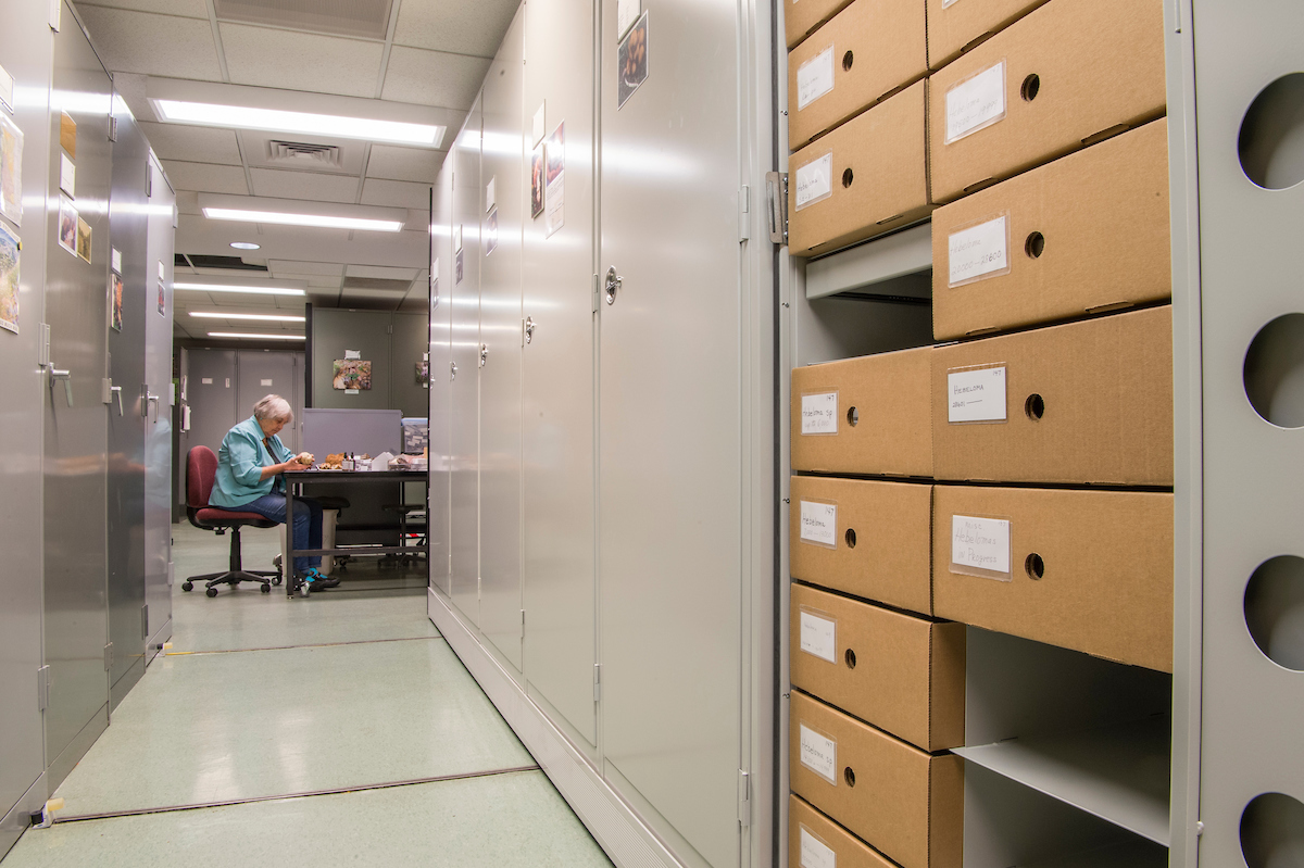 Denver Botanic Gardens is home to an impressive collection of herbaria specimens, but the scientific contained in them isn't constrained to the herbarium cabinets.
