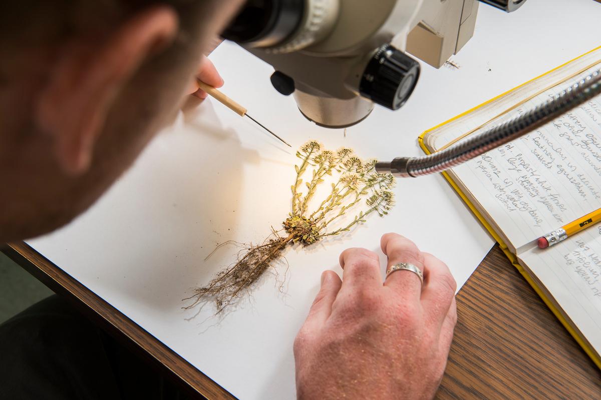 Herbarium voucher specimen at the Denver Botanic Garden