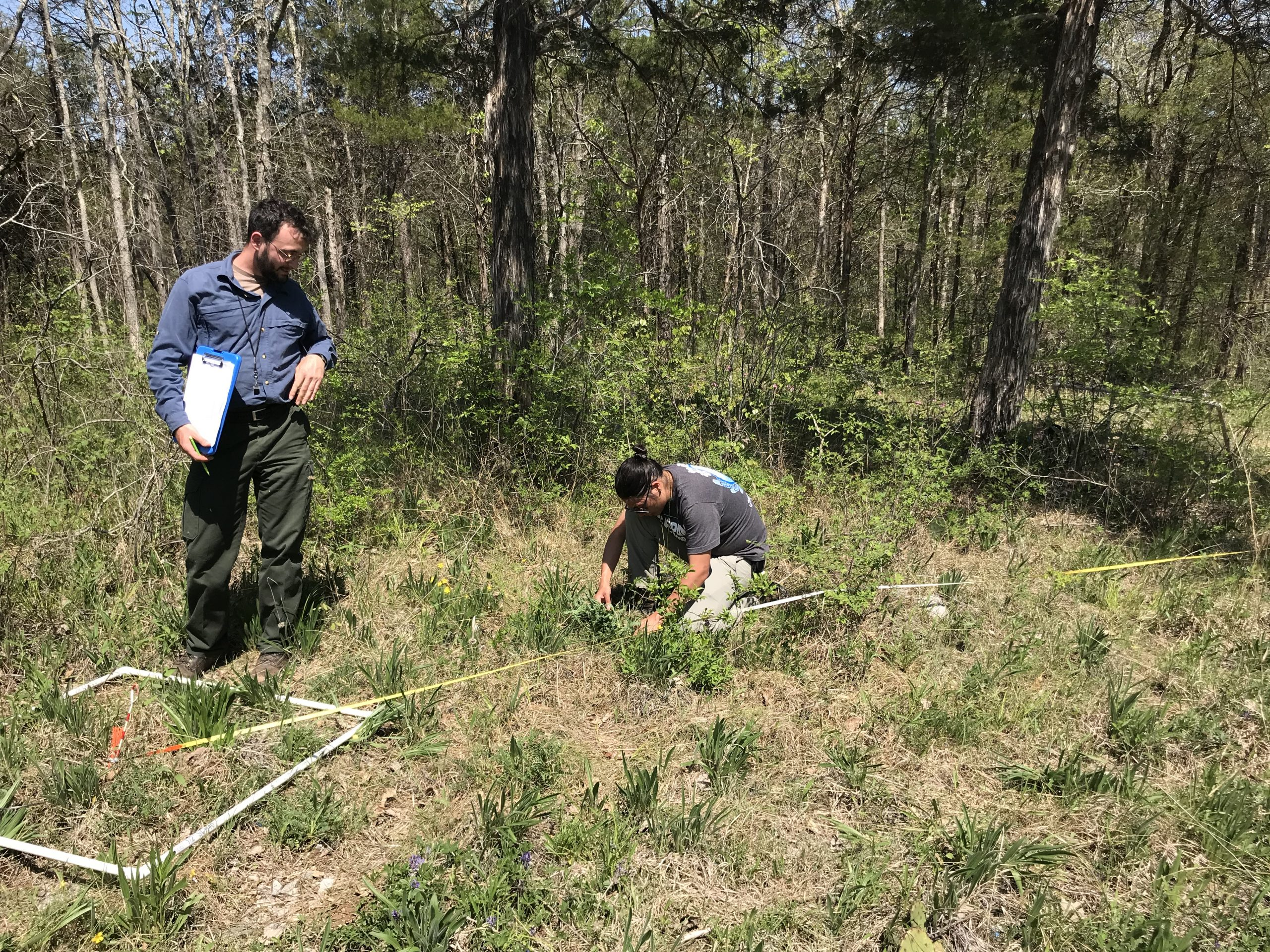 Noah Dell (left) and James Lucas (right) monitoring a natural population of Pyne's ground-plum.