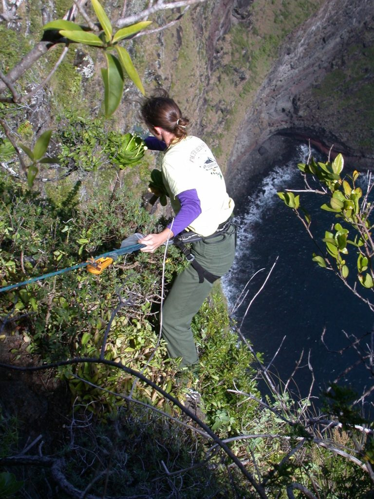 Student rappelling down cliffs to reach plants. Images provided by Ken Wood at the National Tropical Botanical Garden.