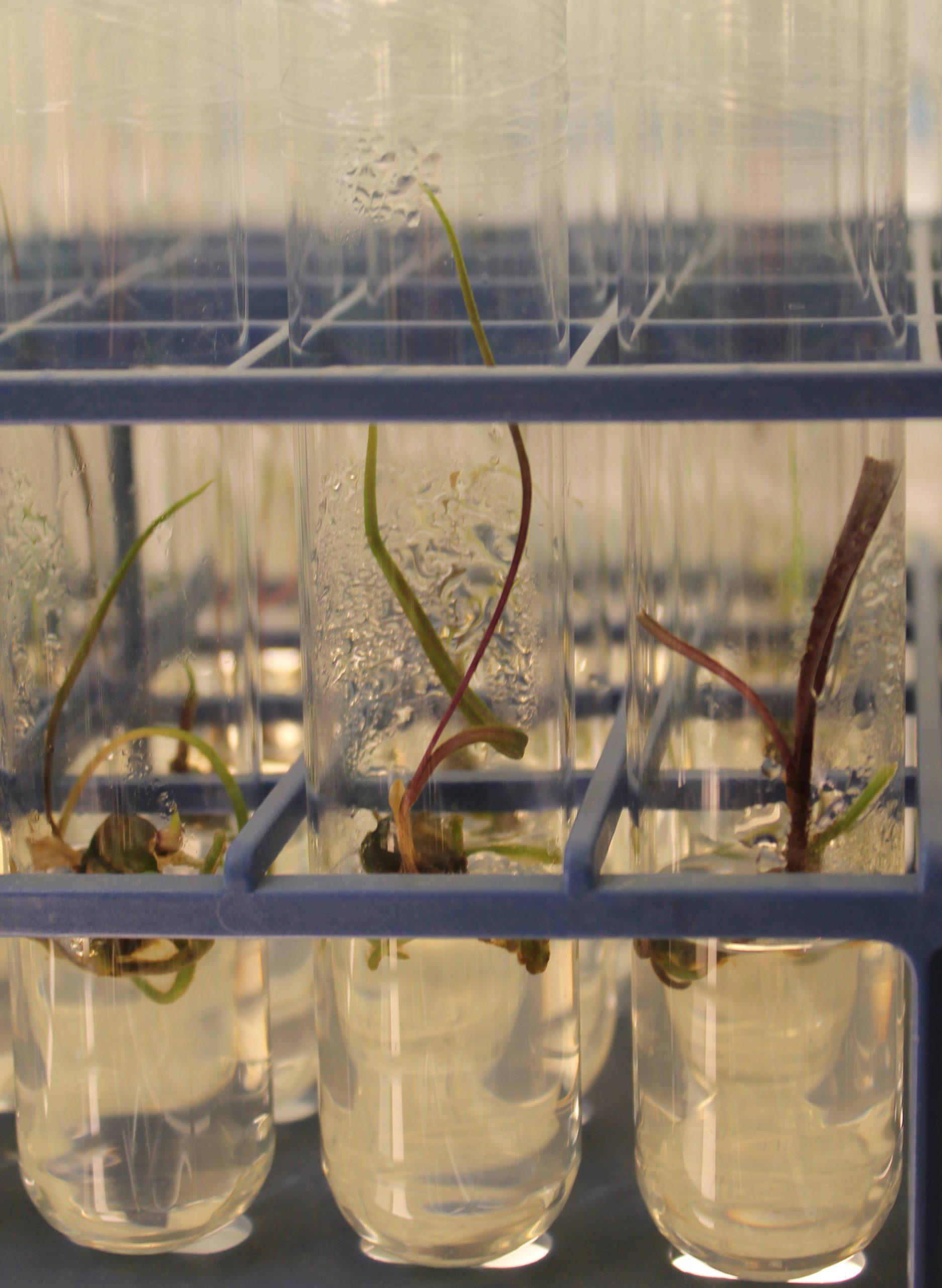 Photo of orchids in vitro