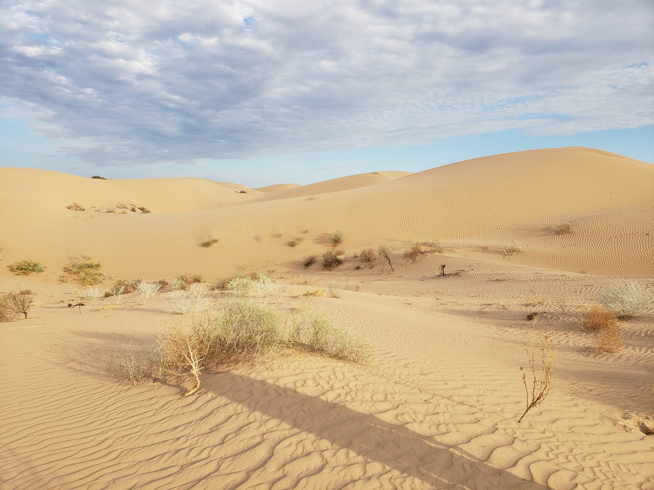Rookie Kim Watts was stationed at the El Centro BLM office, where they have purview over the dunes of the Imperial Sand Dunes Recreation Area.