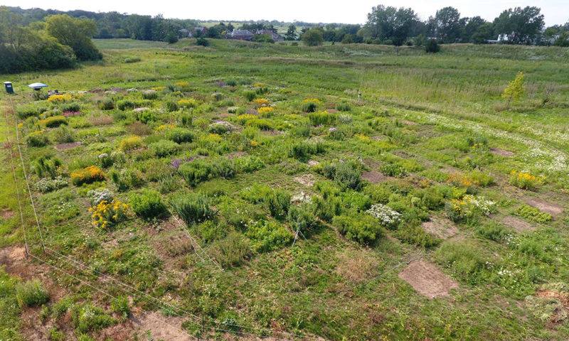 The prairie experiment viewed from overhead. Each plot is 2m x 2m, and the site is approximately 0.75 acre in extent.