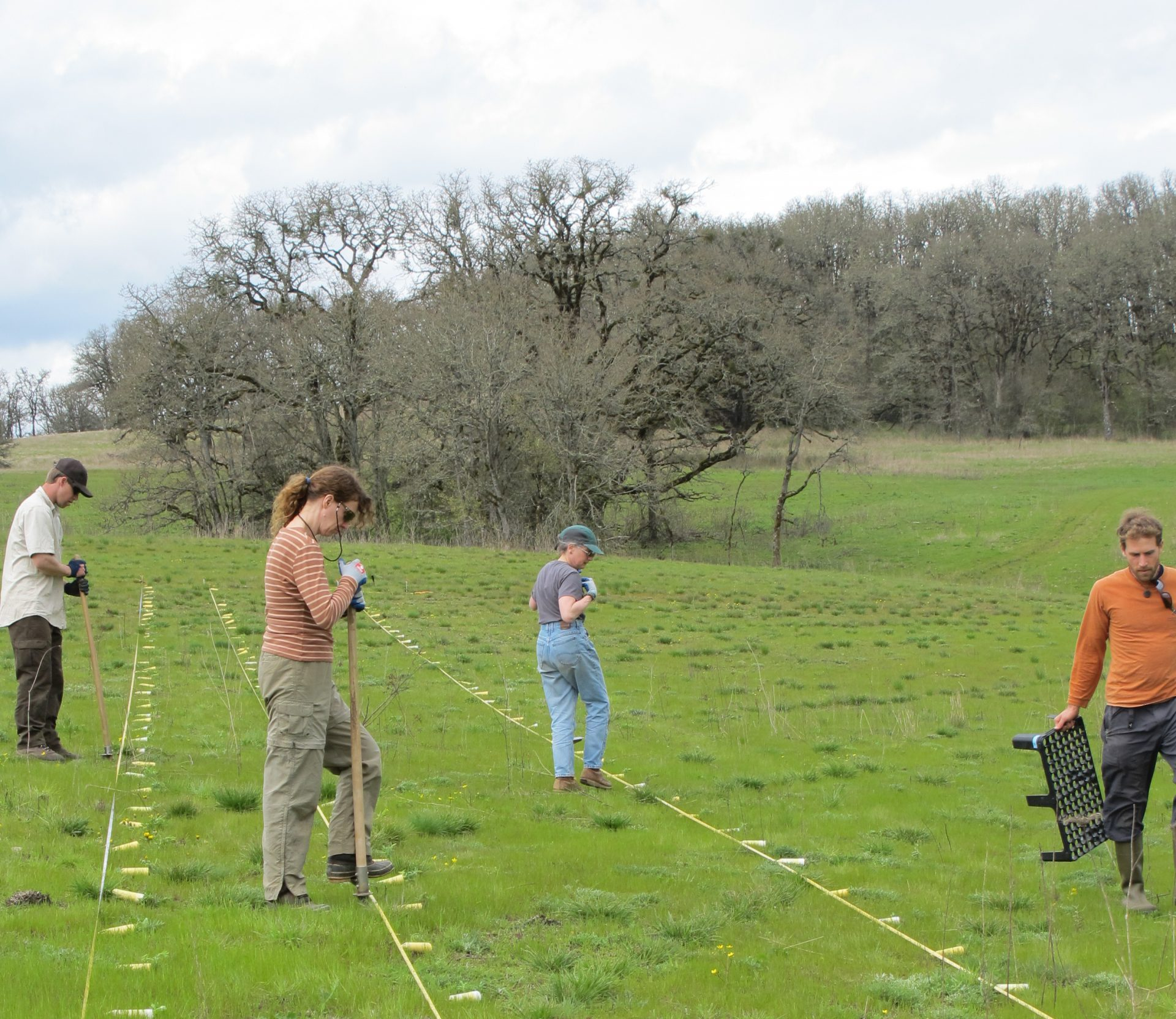 IAE's restoration plantings were done in an experimental design, planted in a grid to aid with tracking success.