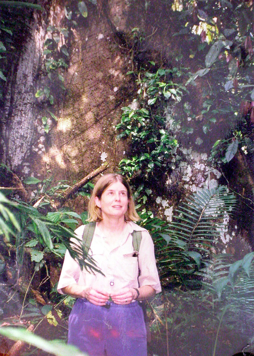 Dr. McDade at La Selva Biological Field Station in Costa Rica, early 2000s, in front of a Ceiba pentandra with huge buttresses.