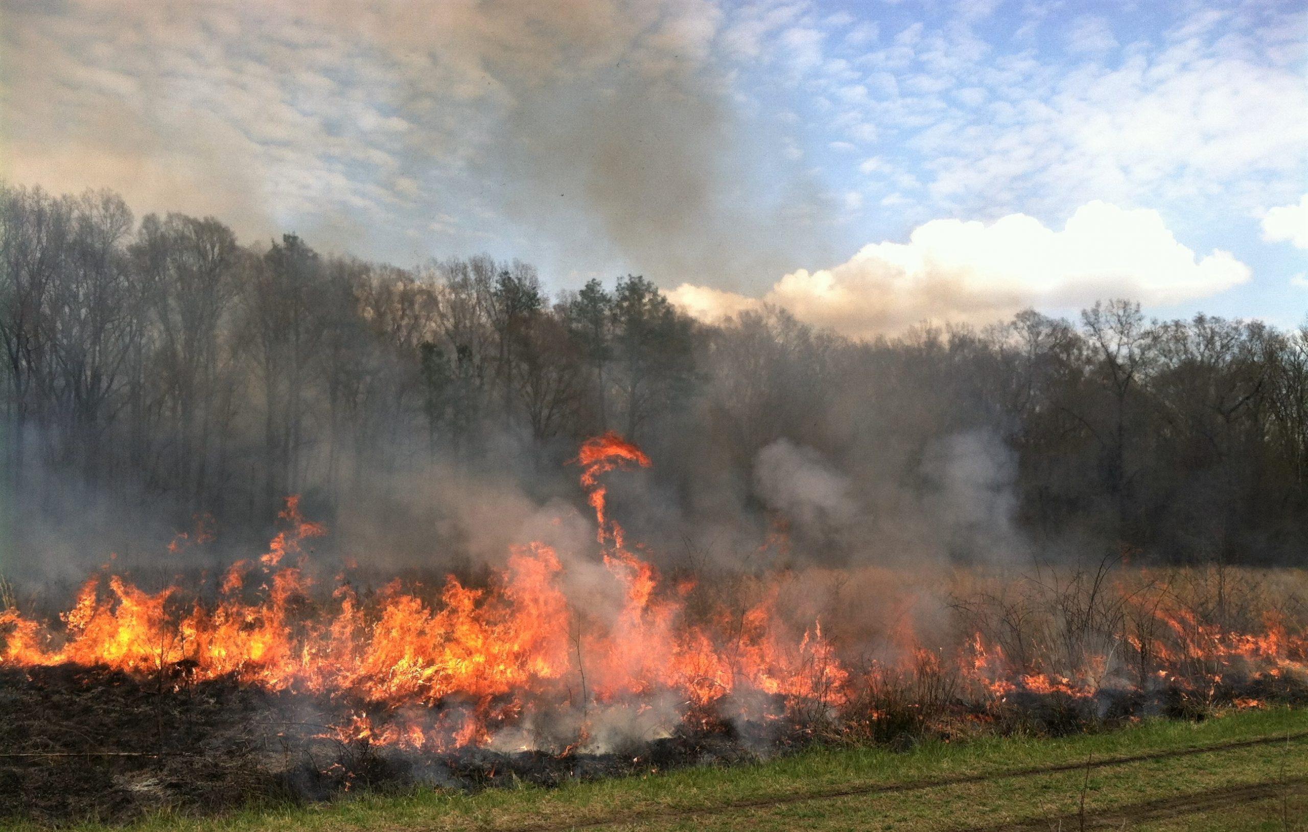Mason Farm fire. Photo by Johnny Randall, courtesy of the North Carolina Botanical Garden