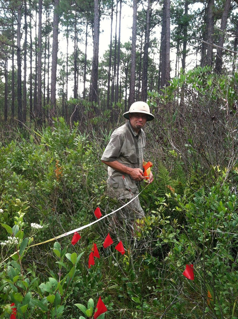 Johnny Randall monitors sandhills lily (Lilium pyrophilum), a species which benefits from regular burns.