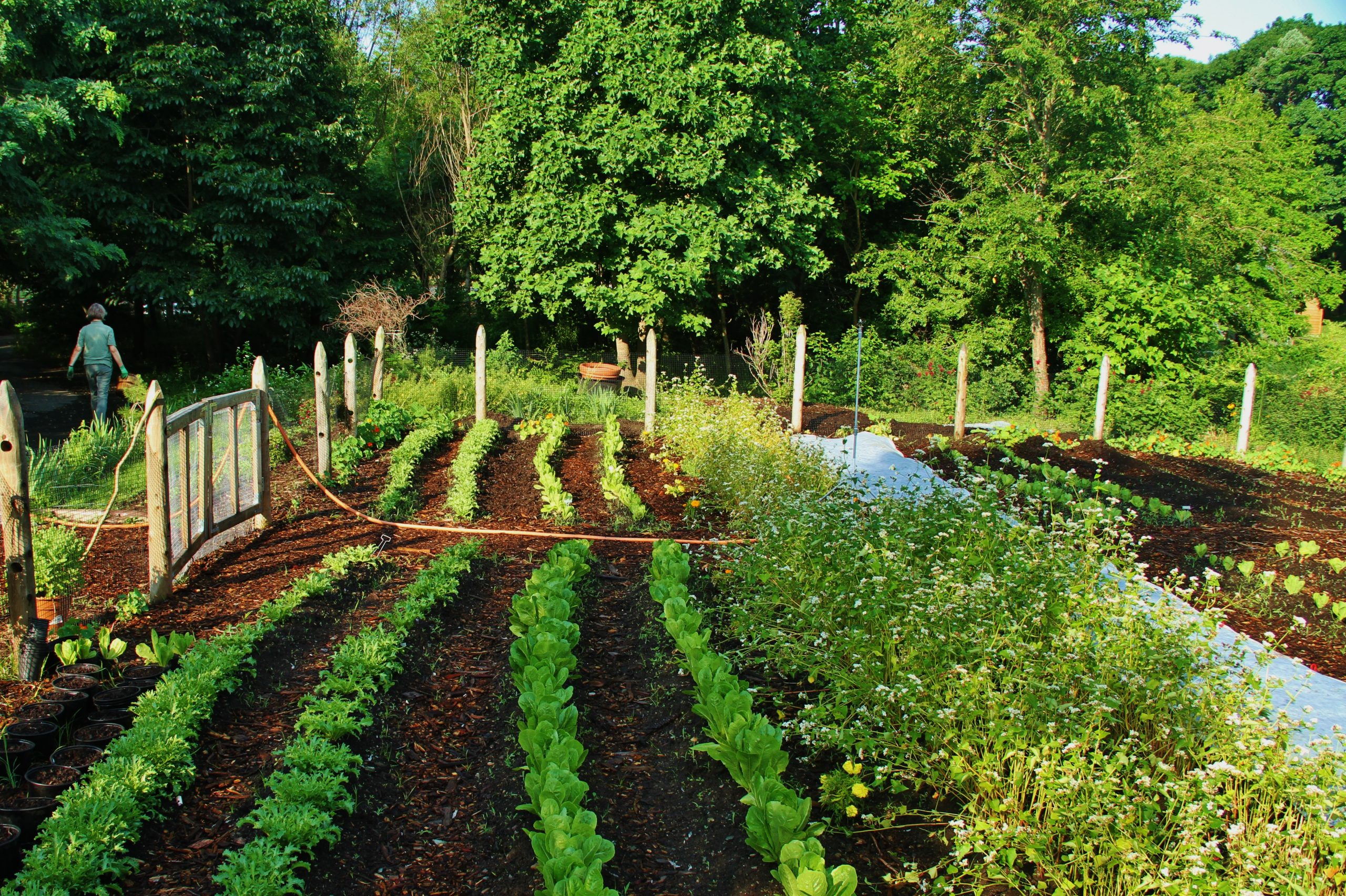 """An organic garden at Franklin Park Zoo. Franklin Park Zoo is a 72-acre site nestled in Boston's historic Franklin Park, long considered the """"crown jewel"""" of Frederick Law Olmsted's Emerald Necklace Park System. Photo credit: courtesy of Zoo New England."""