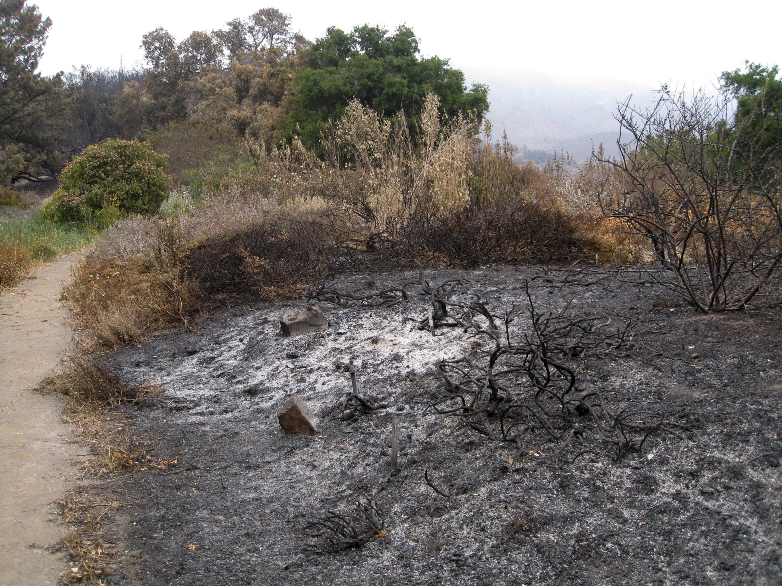 Much of the Porter Trail was reduced to ashes, with the natives there, mainly Ceanothus, pine, cypress and junipers, do not have the ability to re-sprout.