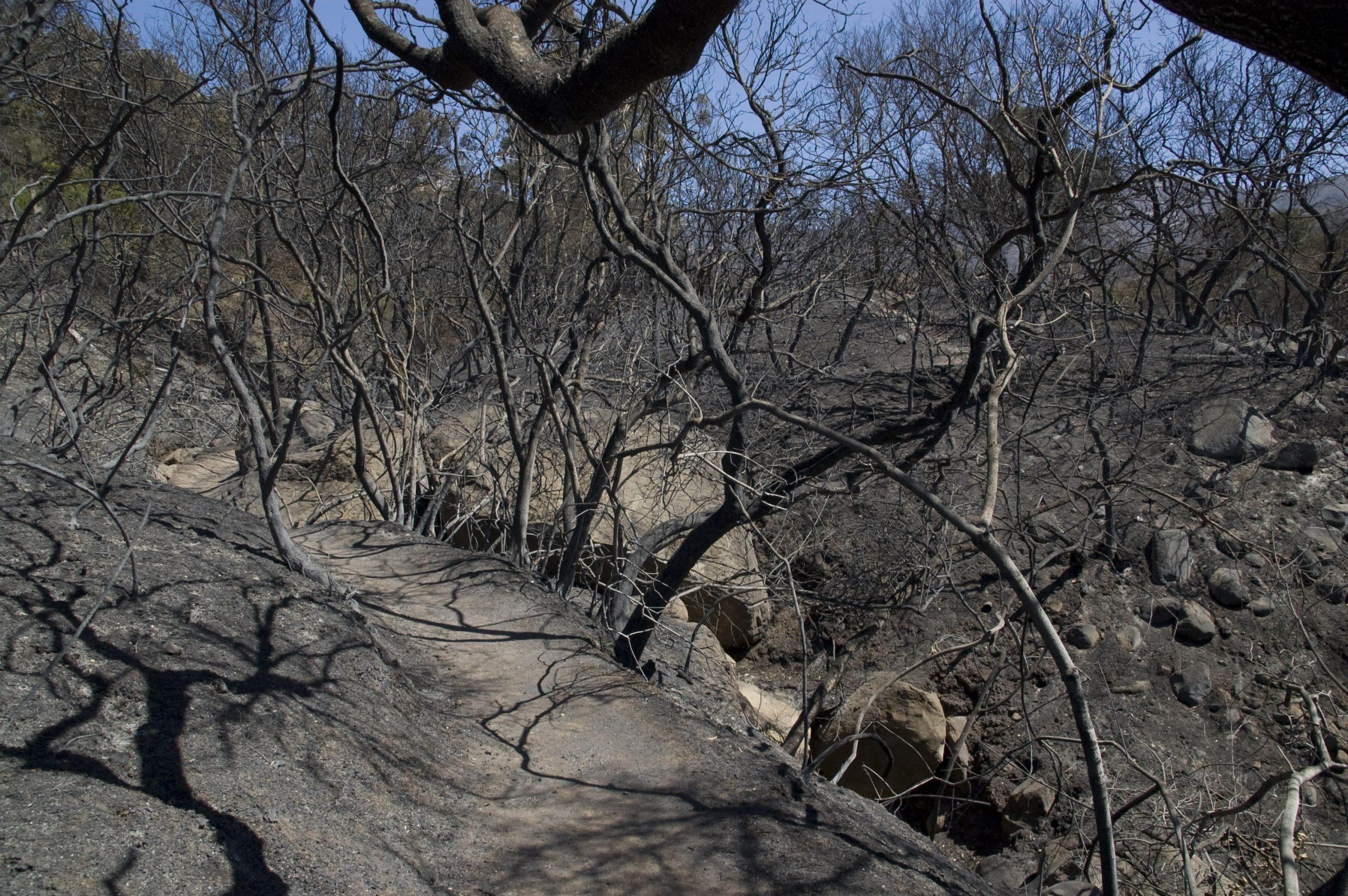 SBBG after Jesusita Fire. Jesusita Fire aftermath at Santa Barbara Botanic Garden, 2009.