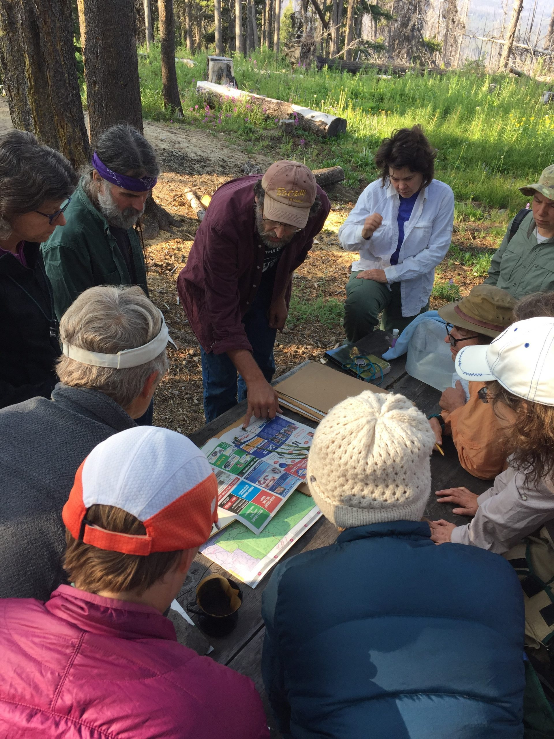 University of Washington volunteers discuss plans; bloom of Wenatchee Mountain checkermallow, an endemic to the state of Washington and federally listed as endangered