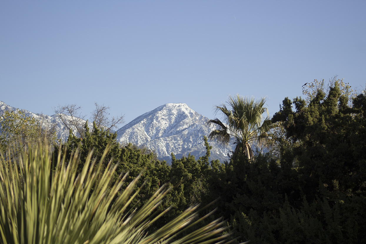 Tucked below the San Gabriel Mountains, Rancho Santa Ana Botanic Garden gets great views of the snow-capped mountains.
