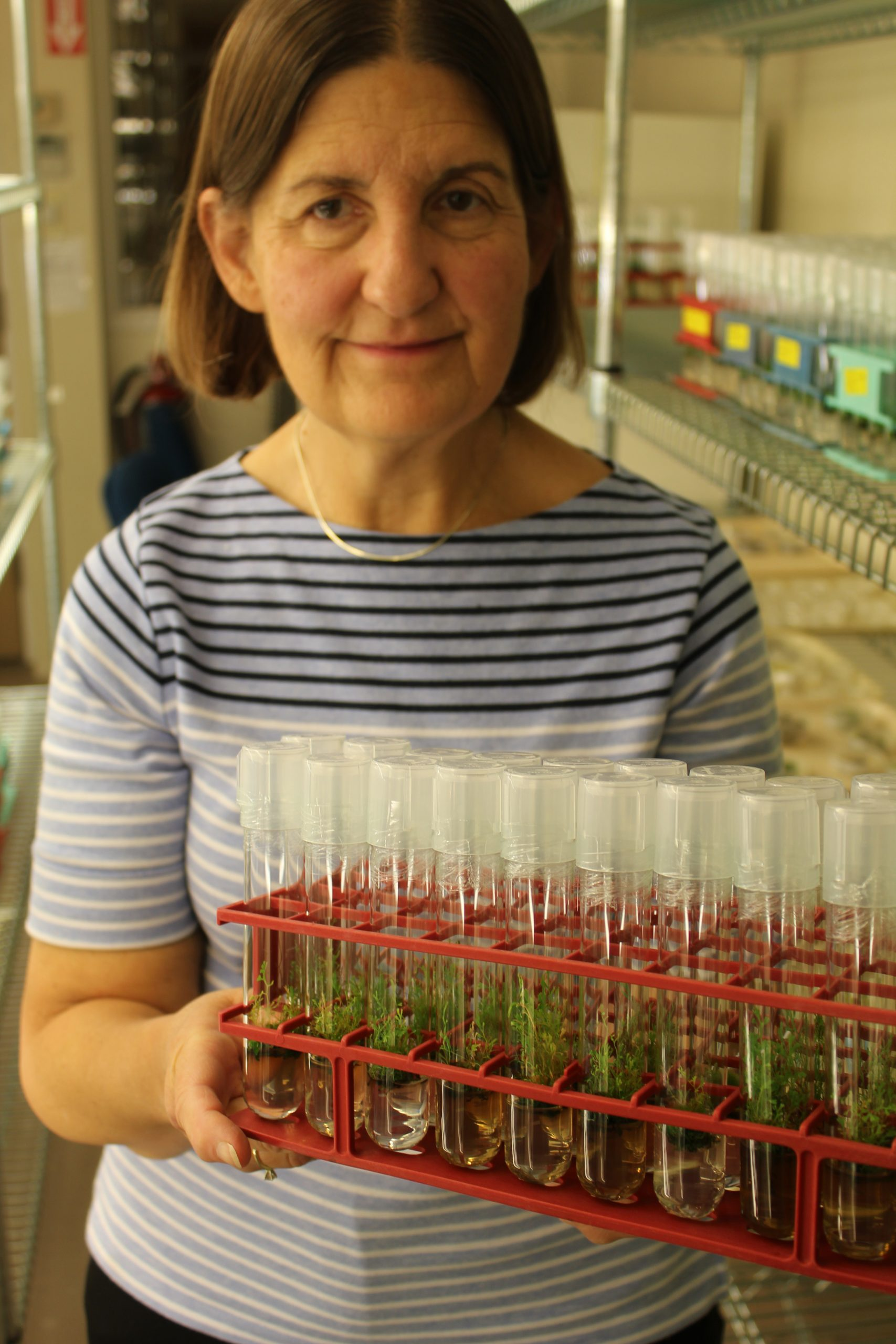 photo of Dr. Valerie Pence in the lab holding a tray of test tubes with seedlings