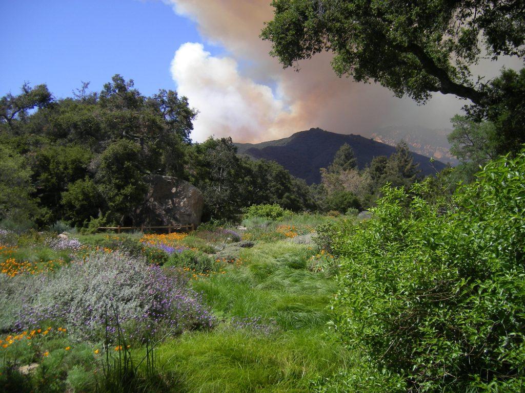 View of Jesusita Fire from Santa Barbara Botanic Garden meadow.