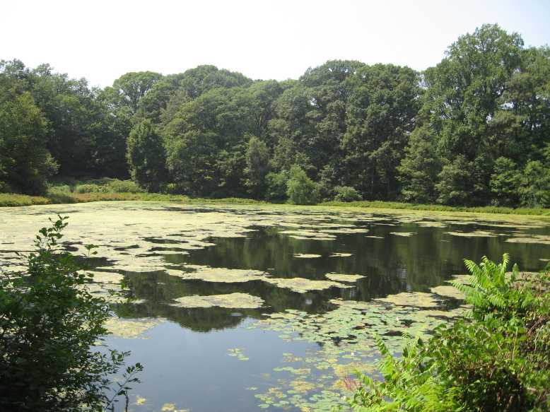 Ward's Pond sits on the border of Jamaica Plain and Brookline, just north of Jamaica Pond and within Olmsted Park, one of the long links in Boston's Emerald Necklace of parks. Photo from Wikimedia Commons.