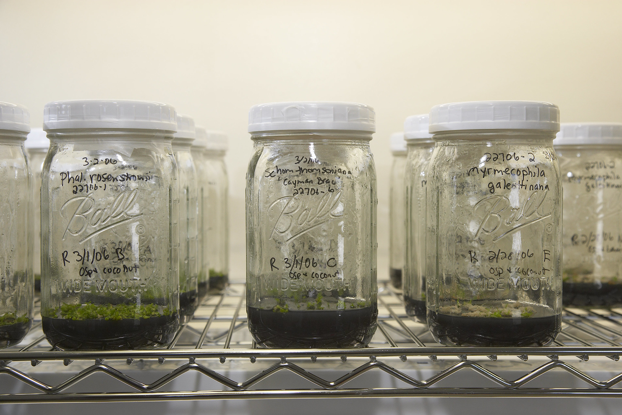 Image of micropropagation lab.