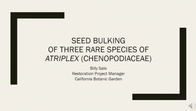 Image of Billy Sale video on seed bulking of three rare species of Atriplex.