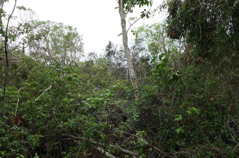 Image of formerly closed canopy site from Fairchild Tropical Botanic Garden