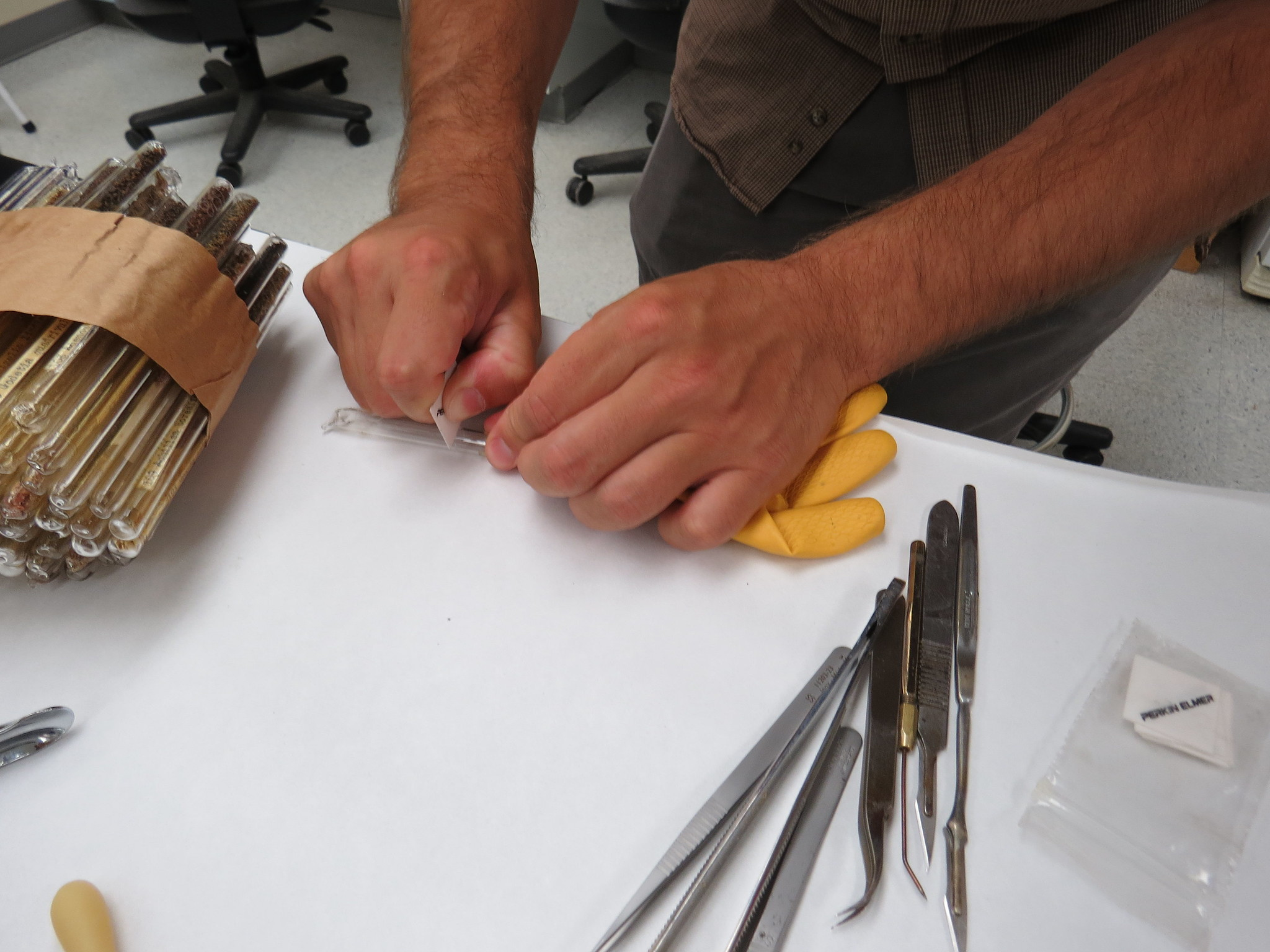 Image of cutting seed tubes.