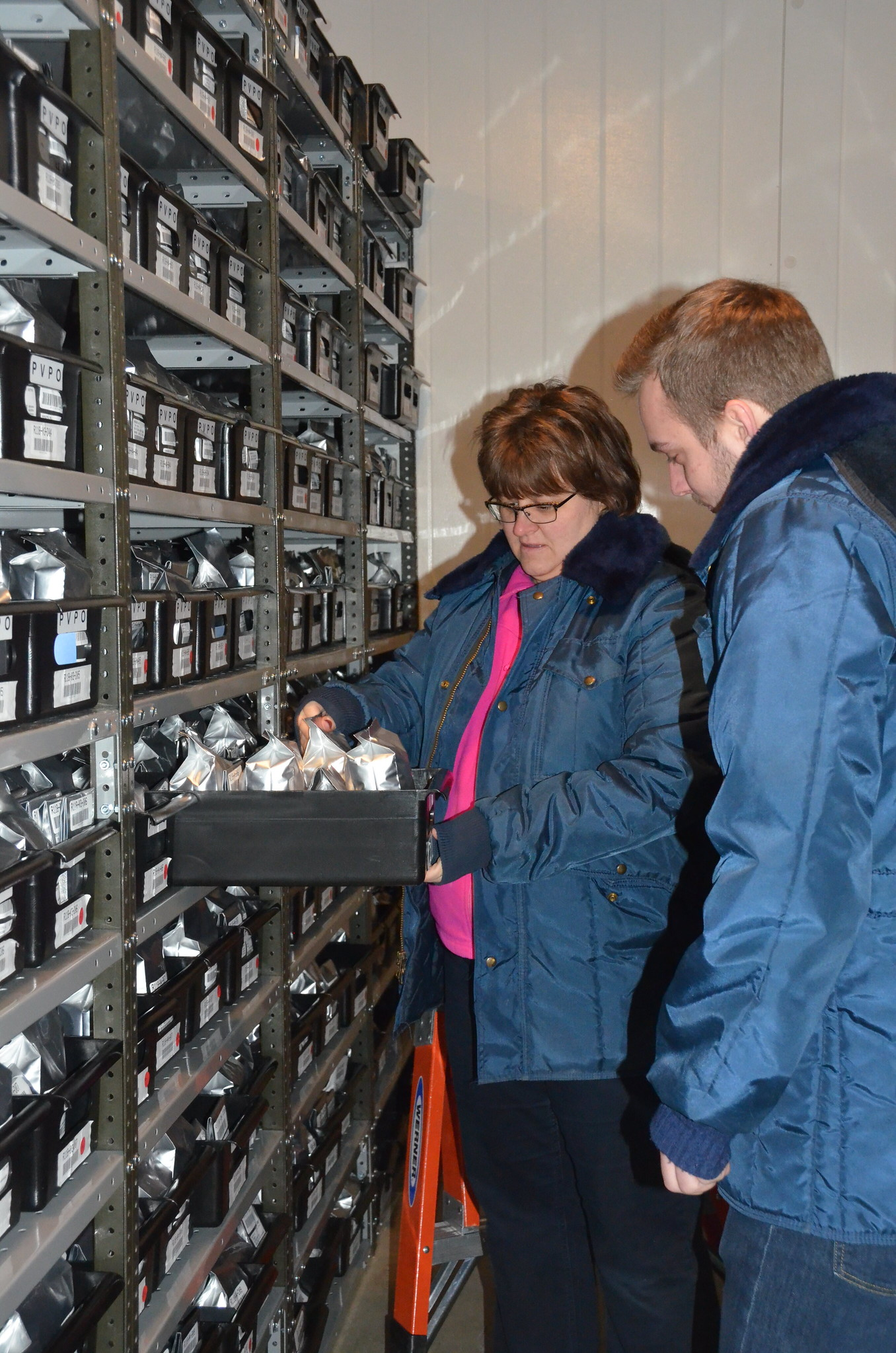 Image of Lisa Hill and Ryan Lynch checking samples at -20C in seed vault at NLGRP.