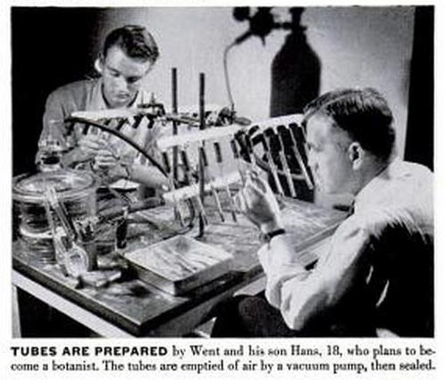 Image of Dr. Went and his son Hans preparing seed tubes.