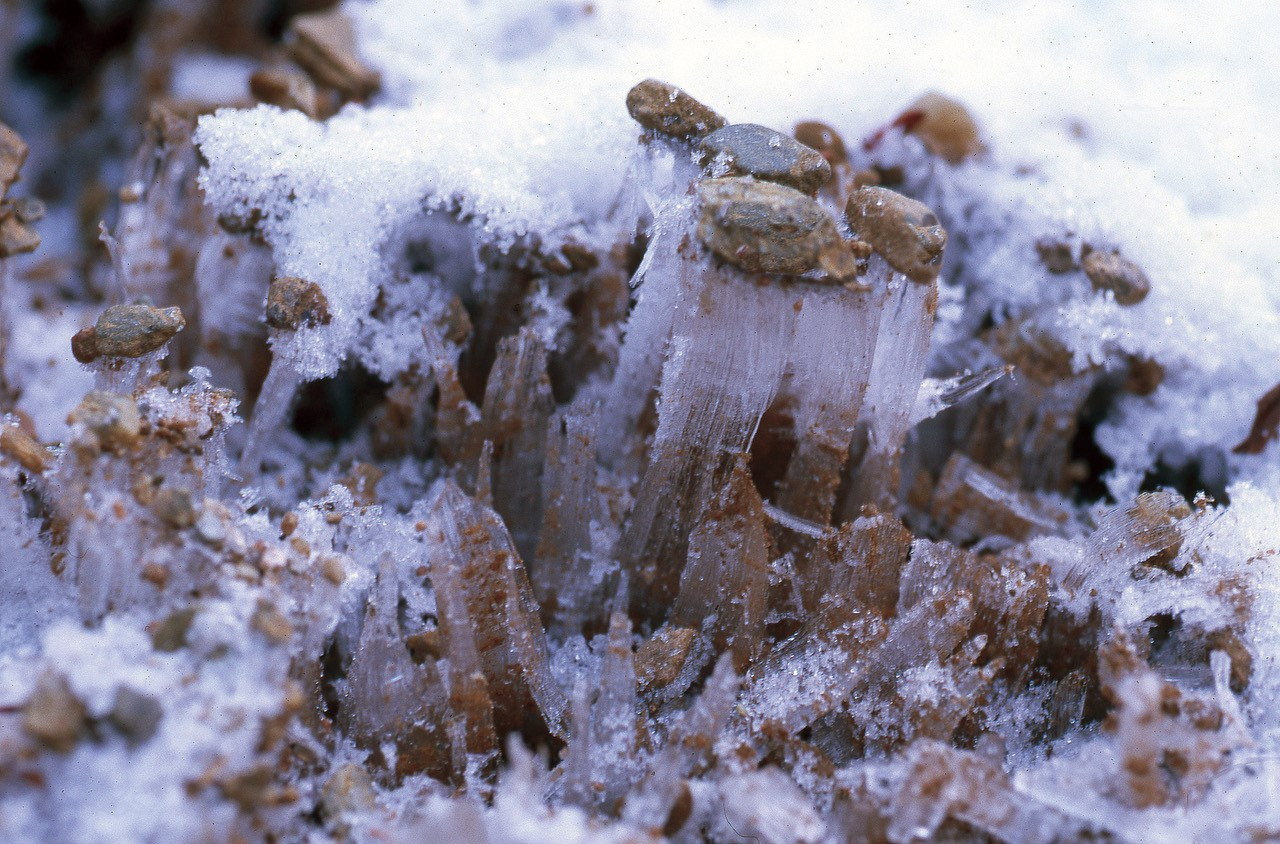 Image of ice pushing up the soil.