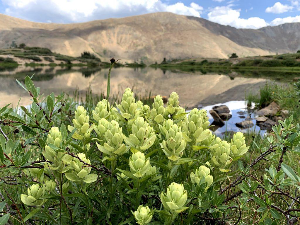 Castilleja at Pass Lake
