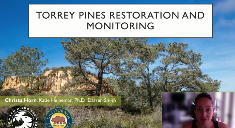 Screenshot from Experimental Restoration of Torrey Pines in Response to Large-Scale Stand Dieback