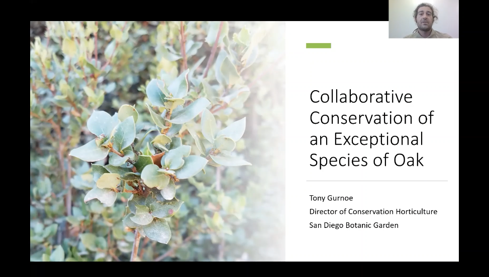 Screenshot of Collaborative Conservation of an Exceptional Species of Oak video