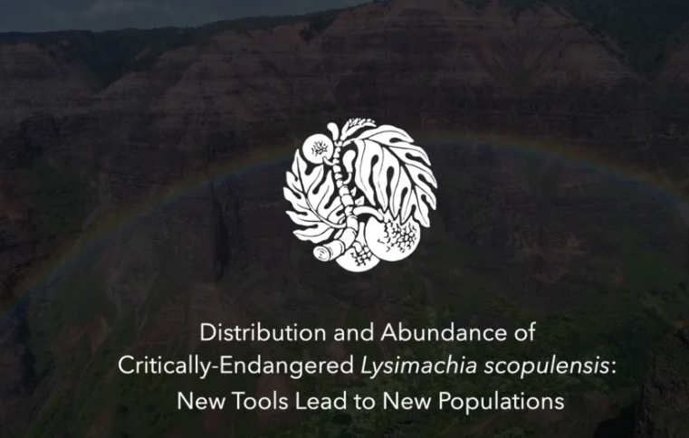 Screenshot from Distribution and Abundance of Critically-Endangered Lysimachia scopulensis: New Tools Lead to New Populations video
