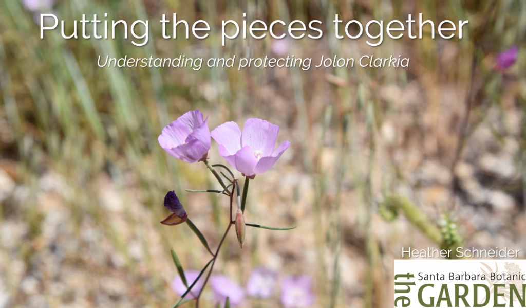 Screenshot from Putting the Pieces Together: Understanding & Protecting Jolon Clarkia video