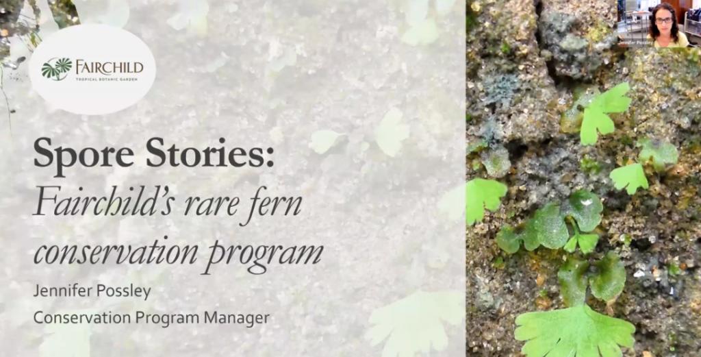 Screenshot from Spore Stories: Fairchild's Rare Fern Conservation Program video