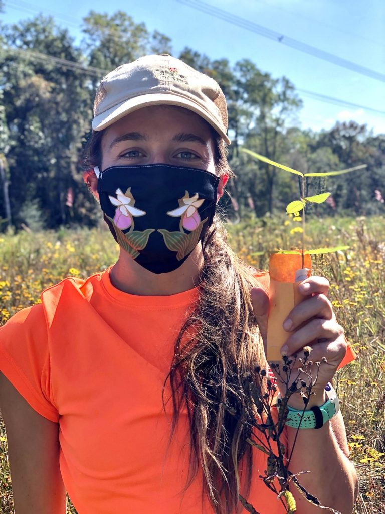 Image of Emma Neigel in the field collecting a cutting of red milkweed (Asclepias rubra) as part of an effort to maintain a safeguarding ex situ collection at Atlanta Botanical Garden.